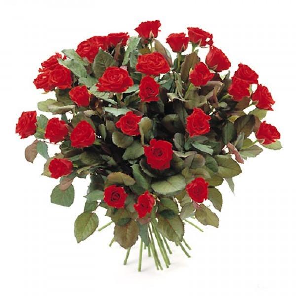 Bukiet 35 róż czerwonych
