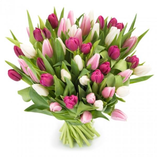 Bukiet 50 tulipanów różowych