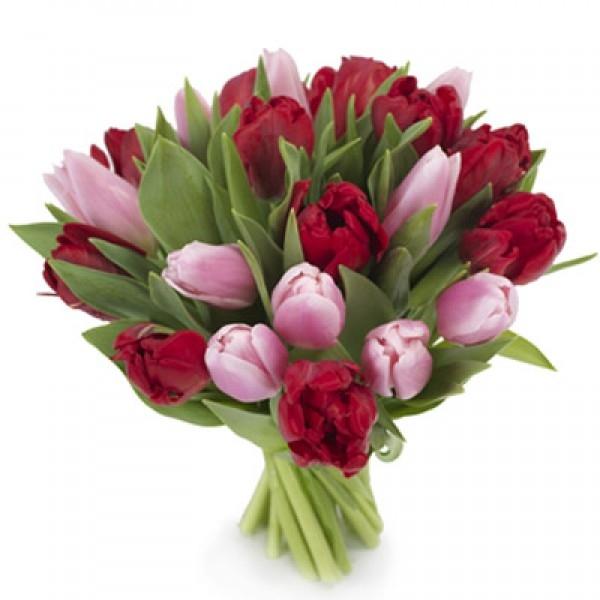 Bukiet 21 tulipanów czerwono-różowych