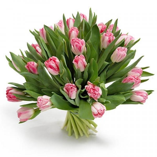 Bukiet 25 tulipanów różowych