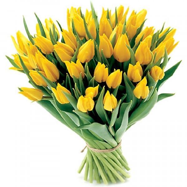Bukiet 35 tulipanów żółtych